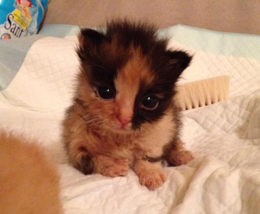 Popolare Piccoli gattini abbandonati chiusi in un sacchetto ..:: La Voce  AW39